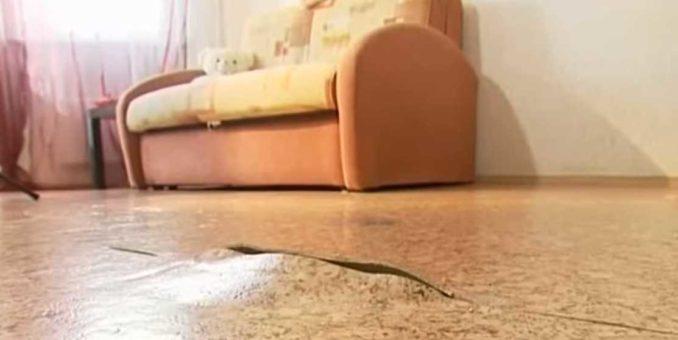 Чтобы такого не было, проверьте к чему прикреплен плинтус. Если к полу, надо снимать и крепить к стенам